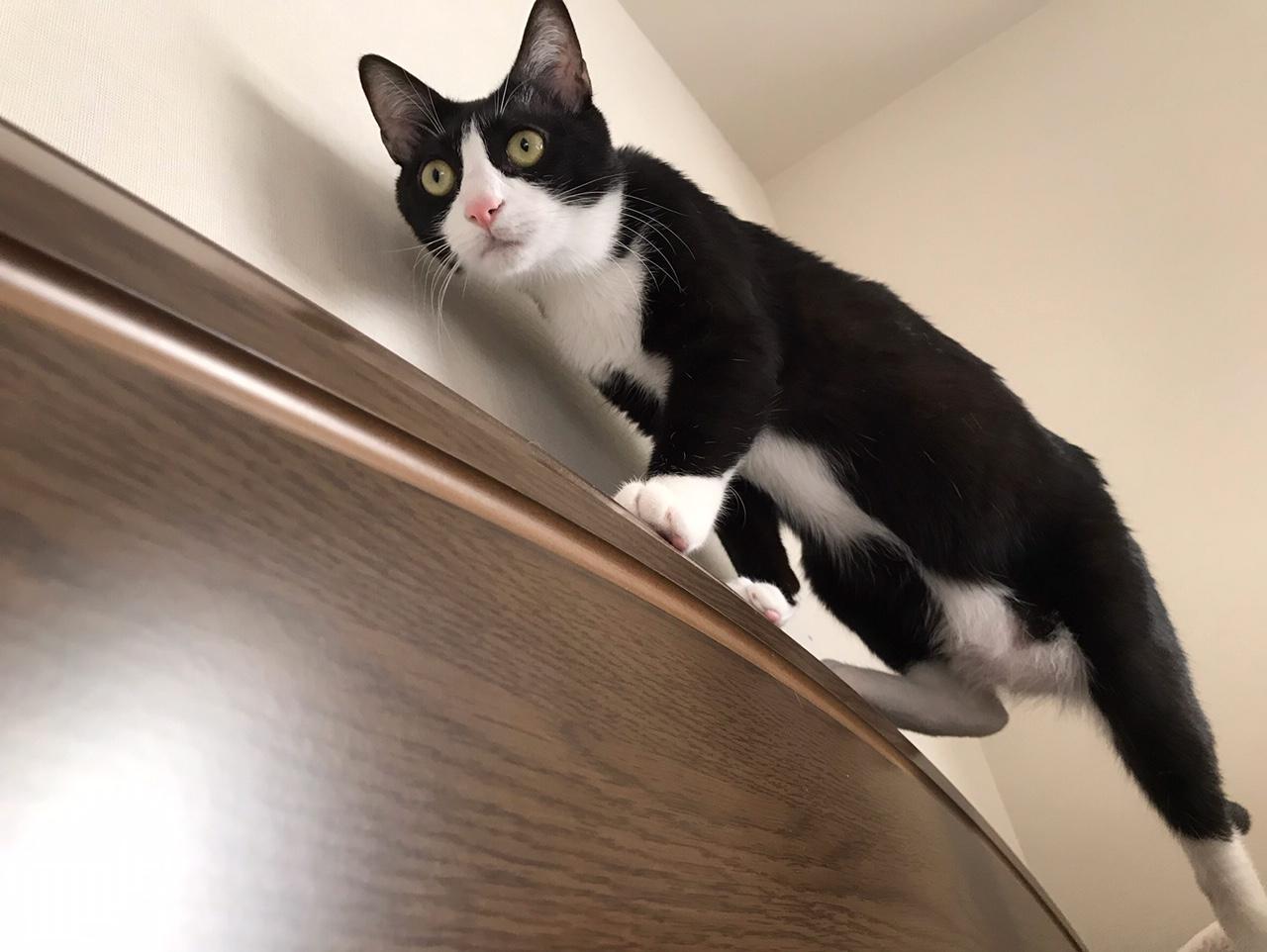 ベッドの淵を歩く猫・ルウくん