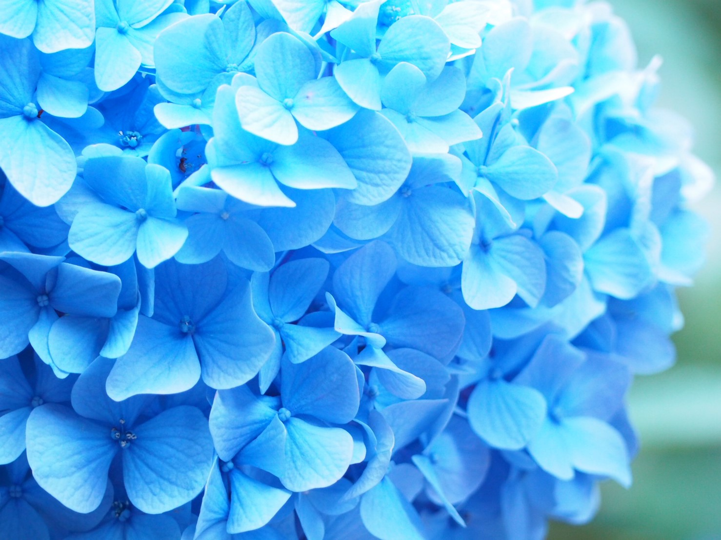 【6月鎌倉旅】#明月院ブルー あじさいの旅♩ _1