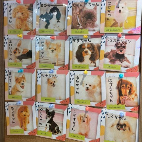 複数の犬の写真
