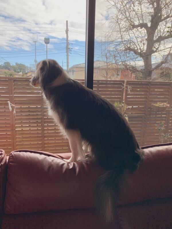 家の中から、すっかり冬になった外の景色を眺めるメルちゃん
