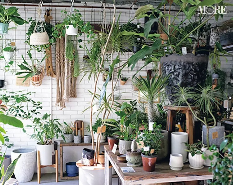 おすすめ植物店のOSLO