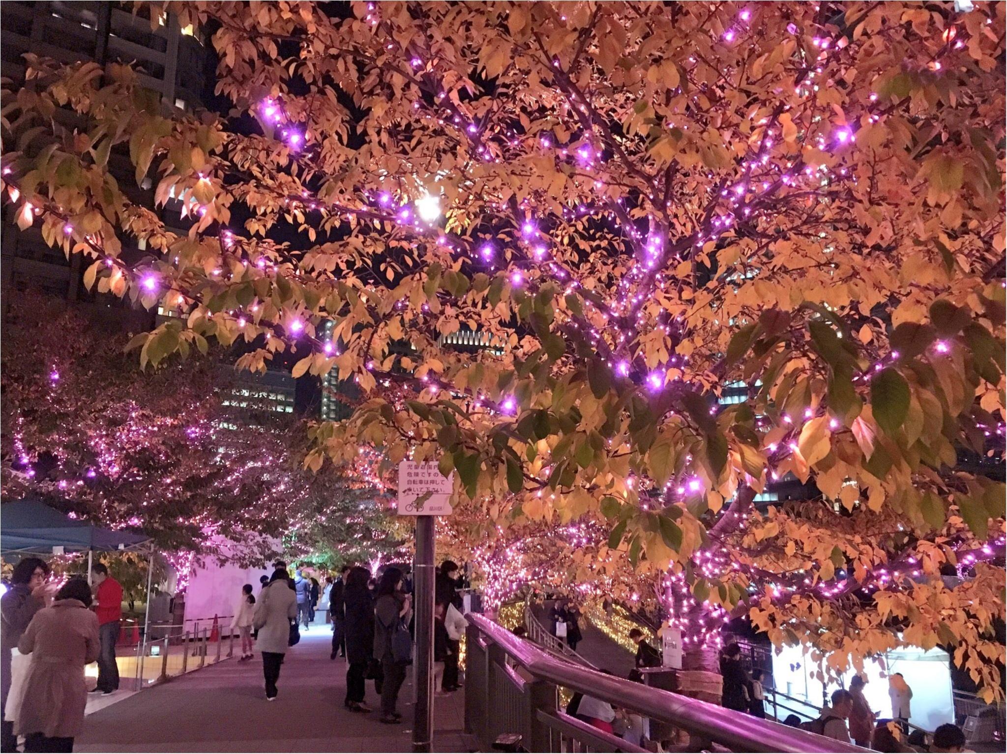 『目黒川』に『冬の桜』が咲きました(*°○°*)♡最新の『環境にやさしいイルミネーション』って???_3