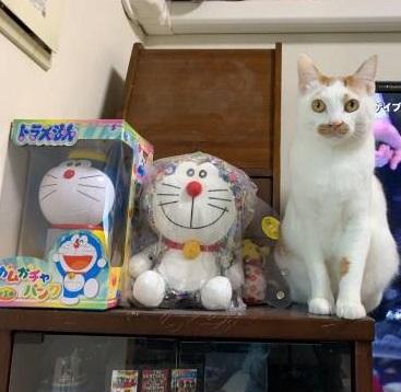 【今日のにゃんこ】ラビくん、あの猫型ロボットと通じあってる!?_1