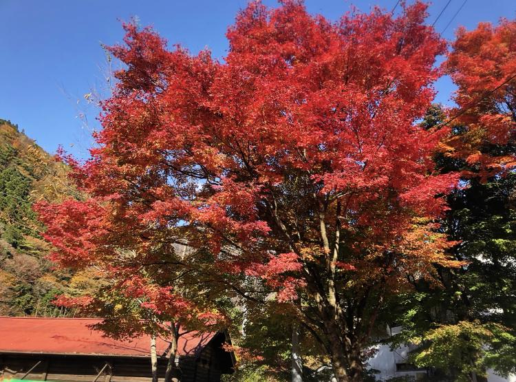 【#静岡】《夢の吊り橋×秋・紅葉》美しすぎるミルキーブルーの湖と紅葉のコントラストにうっとり♡湖上の吊り橋で空中散歩気分˚✧₊_11