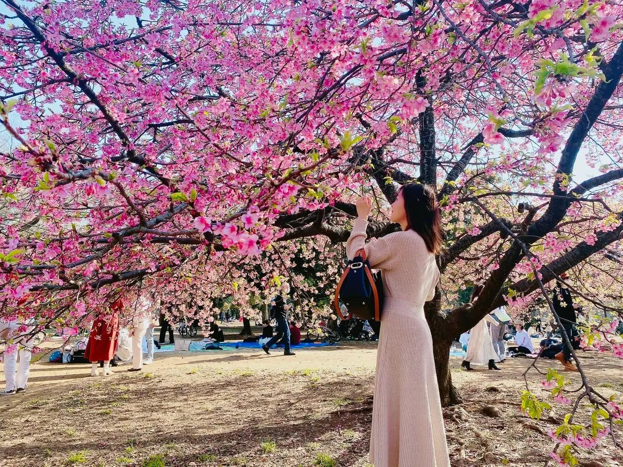 河津桜が楽しめる代々木公園
