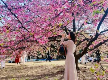都内の河津桜ベストスポットはあの公園!【今週のMOREインフルエンサーズライフスタイル人気ランキング】