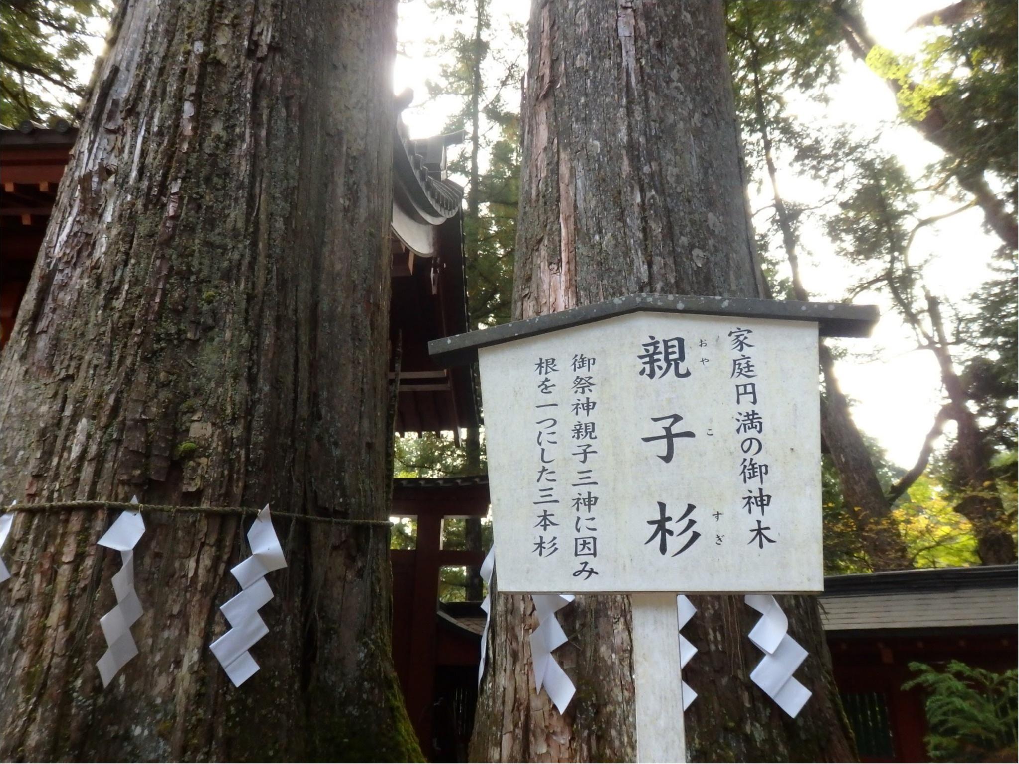 【知らなかった!】日本一楽しめる神社へ潜入してみた_12