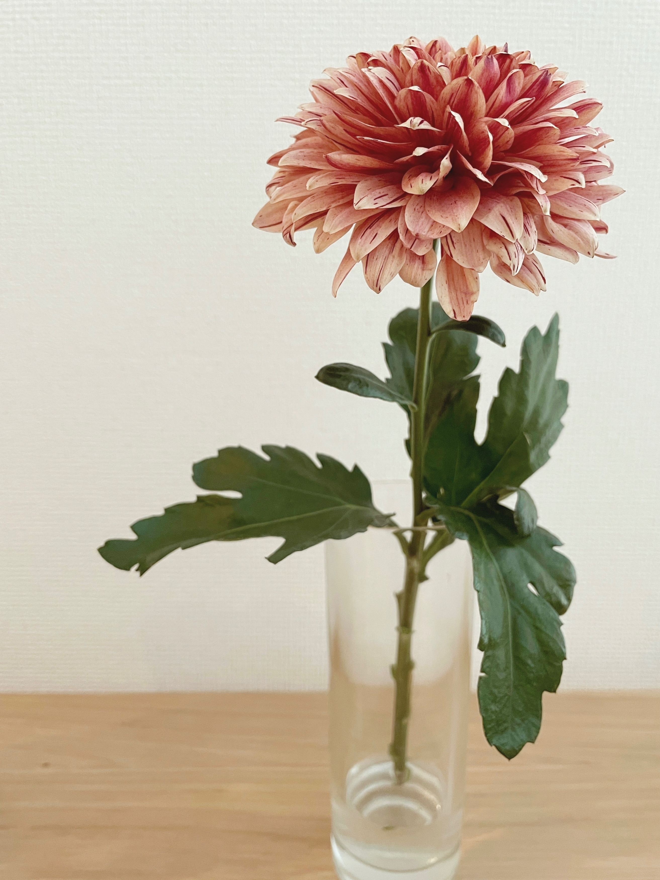 【おうち時間】お部屋に花を取り入れて癒し空間に♡_1