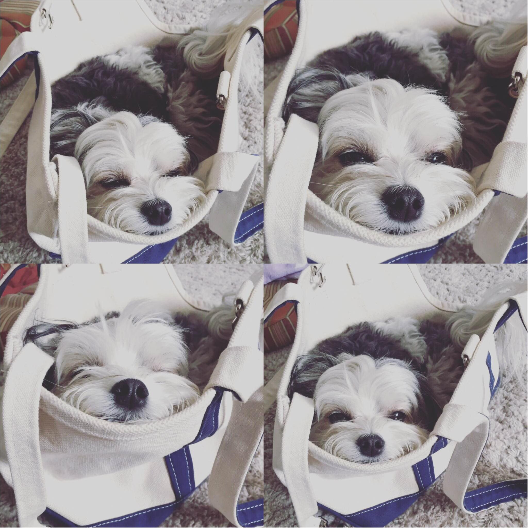 【今日のわんこ】目が開かないー! 太郎くんが「入ると必ず寝てしまう」ものとは?_1