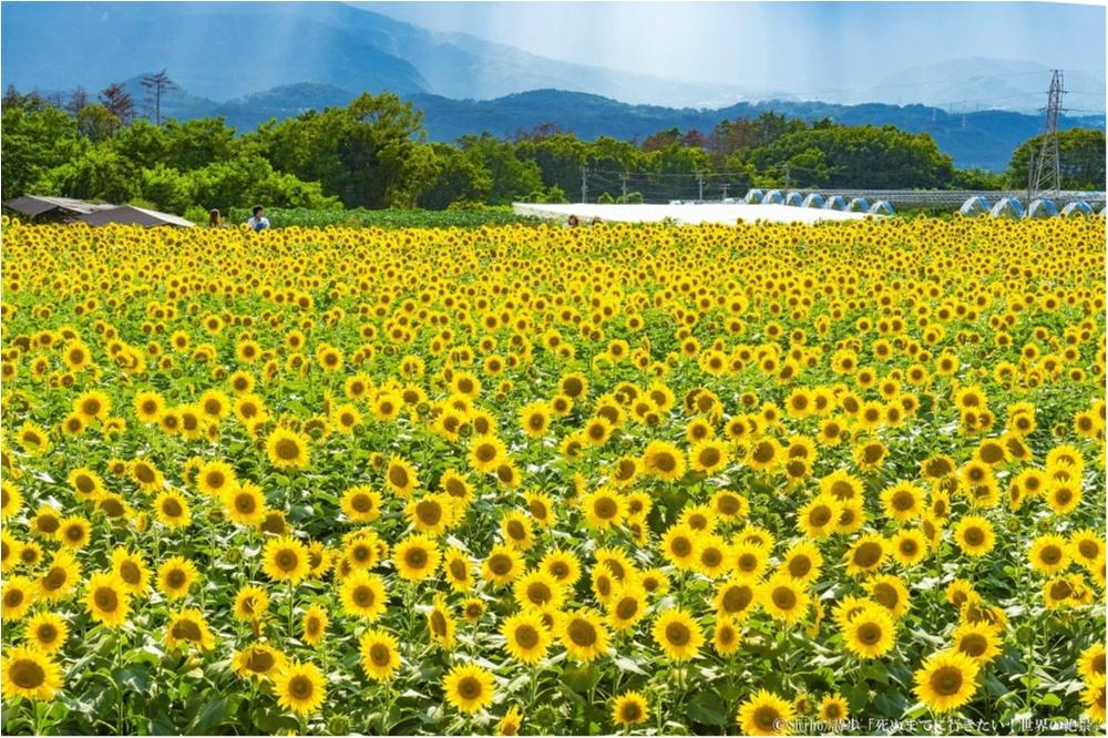 """「死ぬまでに行きたい! 世界の絶景」著者、詩歩さんが選ぶ! 夏、女子が観るべき""""日本の絶景""""7選 _5"""