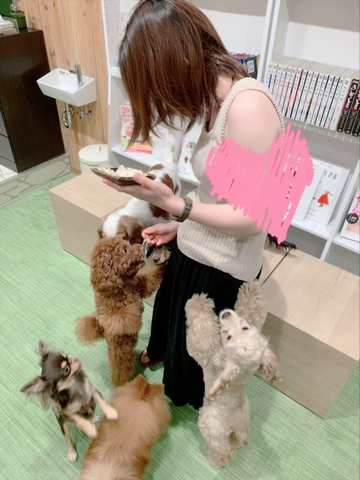 【わんこ好きさん必見!】puppy cafe RIO行ってきました♡癒されまくりスポット!_4