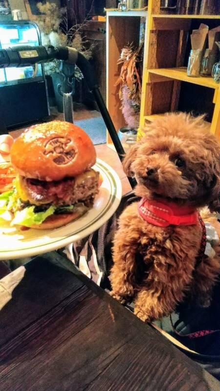 【今日のわんこ】テテちゃんと、おいしそうなハンバーガー_1