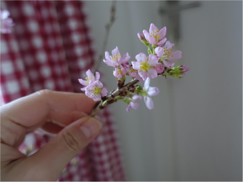 《花のある生活》一足お先に、お花見はいかが??自宅で出来るお花見はなんとワンコインで!_1
