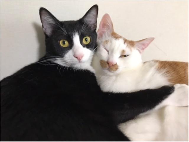 仲良しの猫・ルウくんとラビくんがくっついている様子