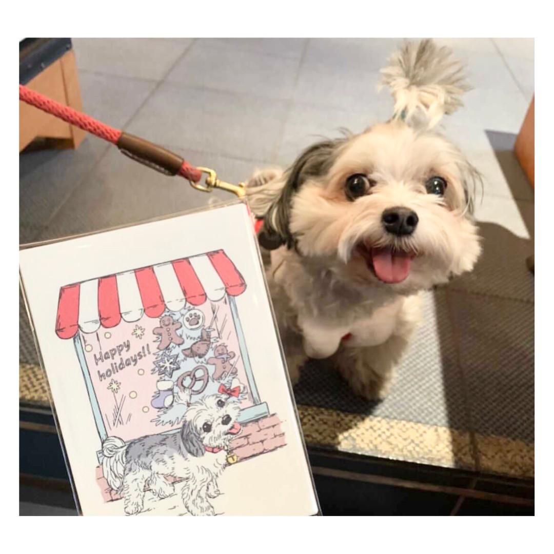 似顔絵を描いてもらってご満悦なチワワとマルチーズのミックス犬・太郎君