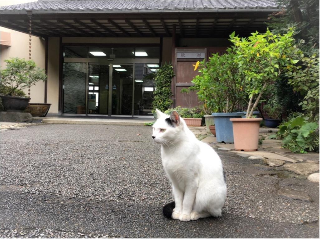 鎌倉で話題の小さなケーキショップ_7