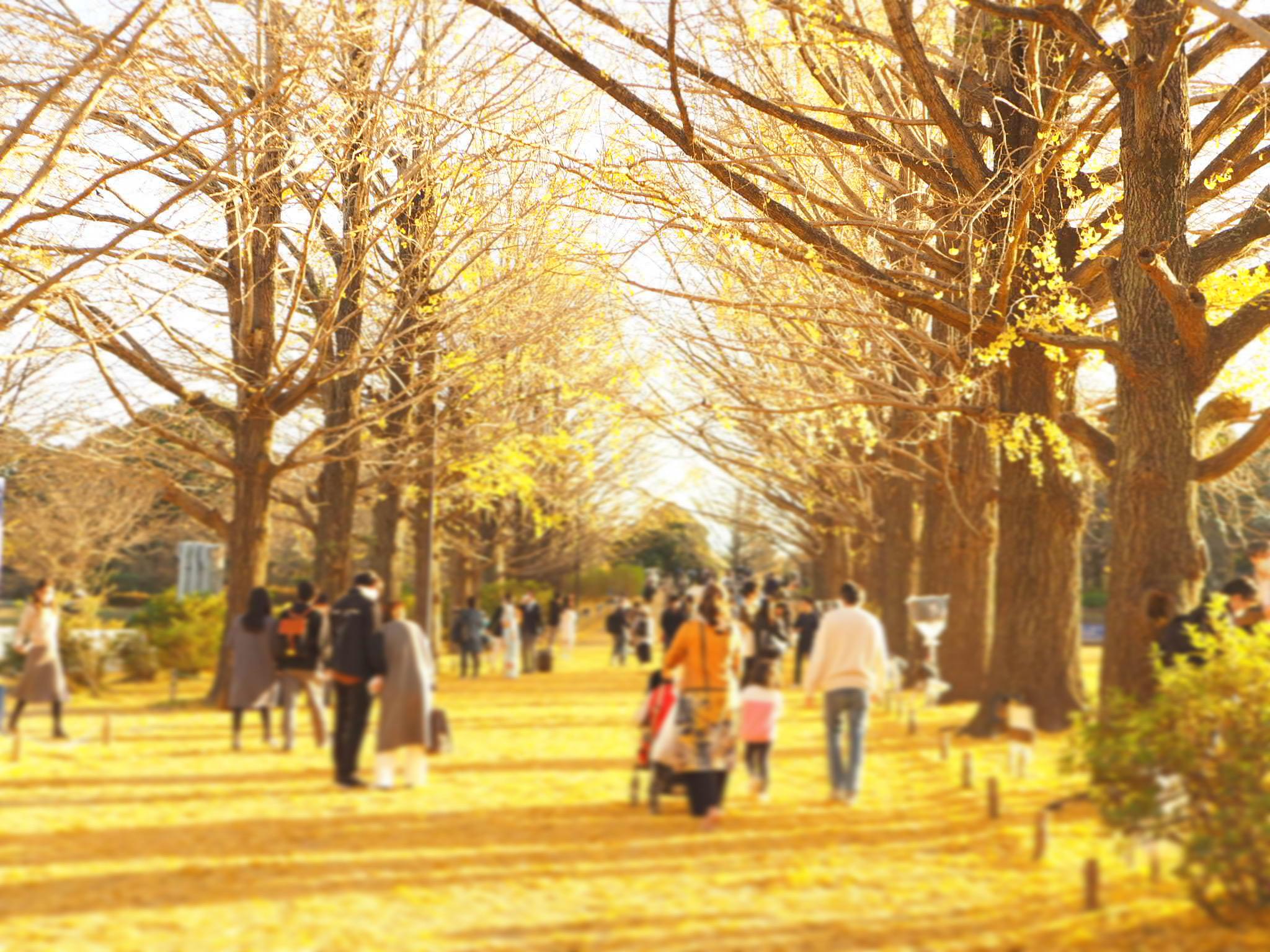 【秋の昭和記念公園】銀杏並木と紅葉サイクリング♩_2