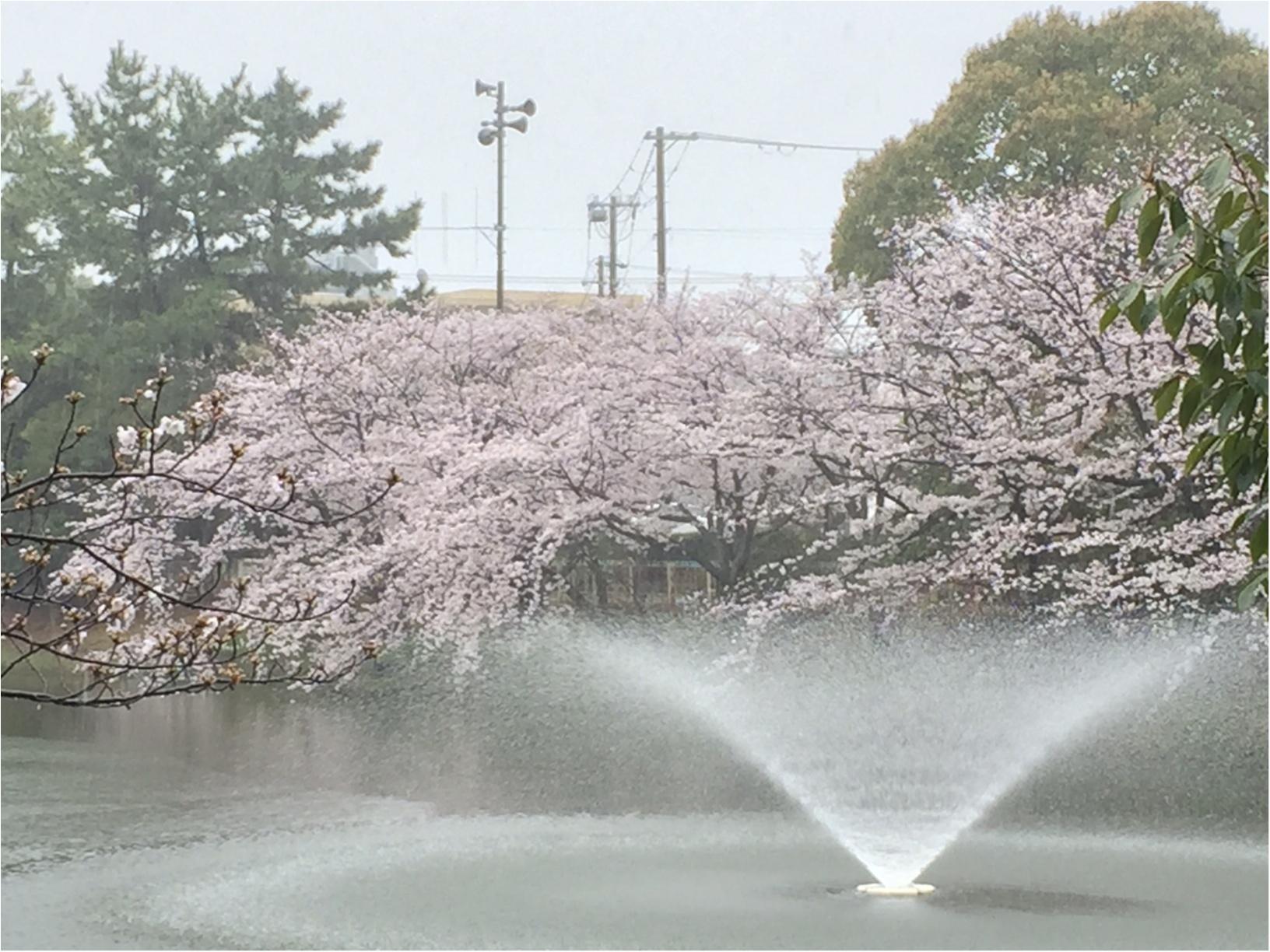 【関西お花見スポット】「日本さくら名所100選」にも選定!夙川に映る桜が美しい♡_9