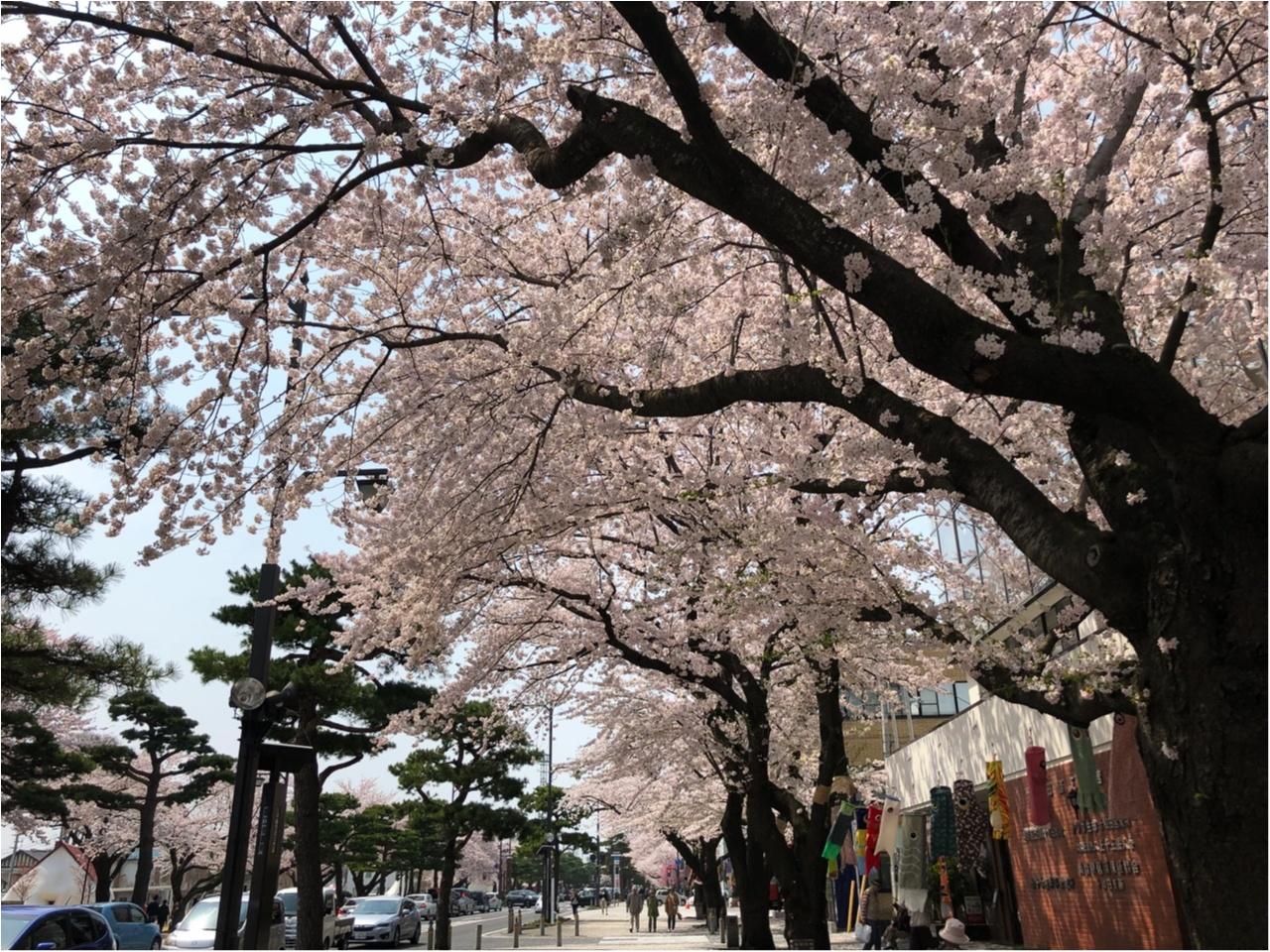 【あんバター好きのカフェ巡り】十和田の街中にある古民家カフェ『カフェミルマウンテン』で癒しのひとときを_5