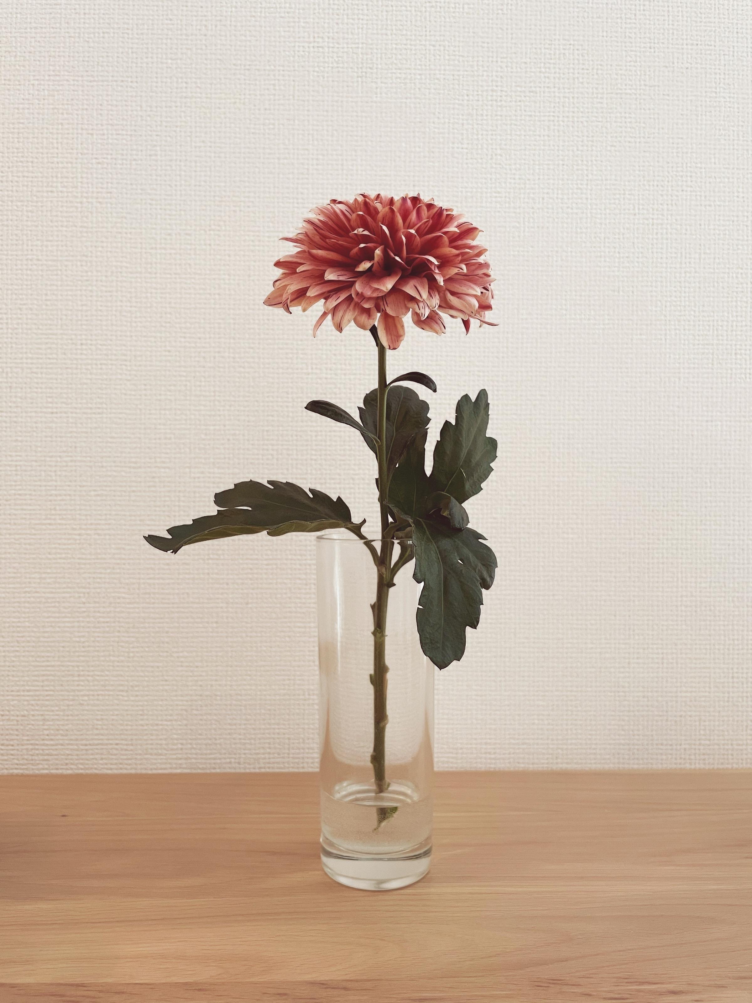 【おうち時間】お部屋に花を取り入れて癒し空間に♡_3