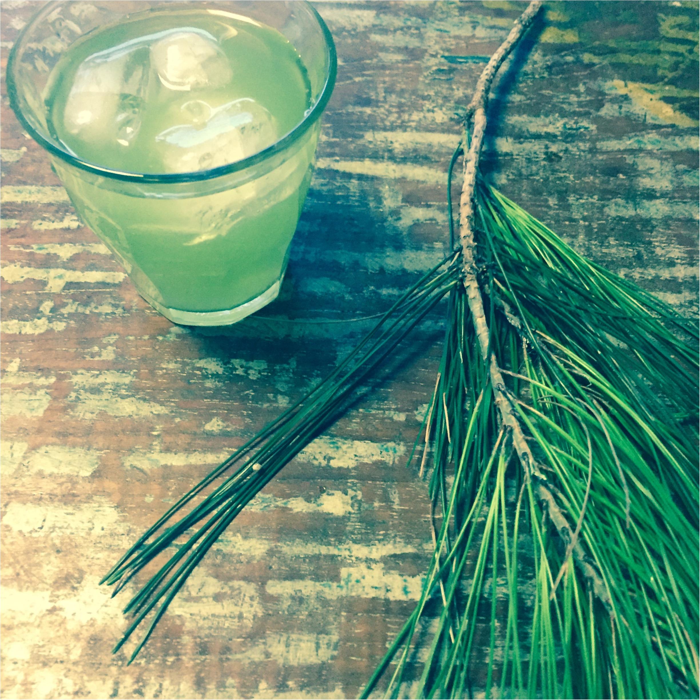 日本のスーパーフード「松の葉」の簡単茶でお通じもお肌も快調!_1