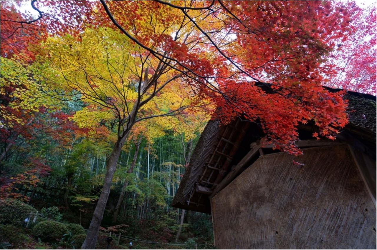 【関西おでかけ】のんびり散策できるオススメ紅葉スポット_5
