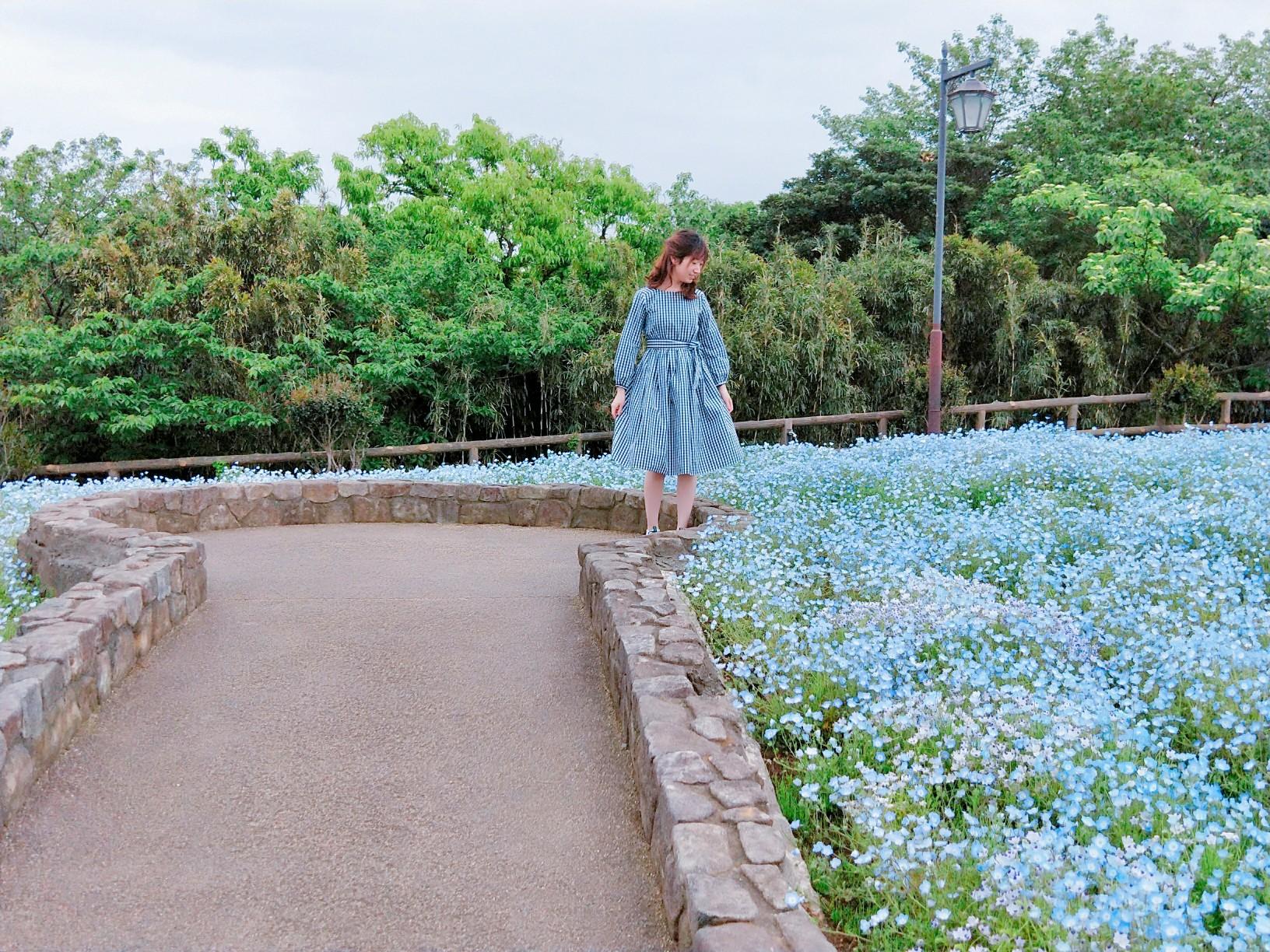 神奈川県でも見られる!ネモフィラ✿ポピー祭りも開催中!_3