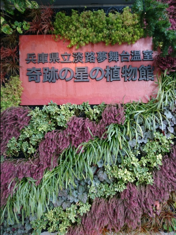 クリスマスシーズンに家族&カップルにお勧め!植物と光に彩られた奇跡の植物館_1