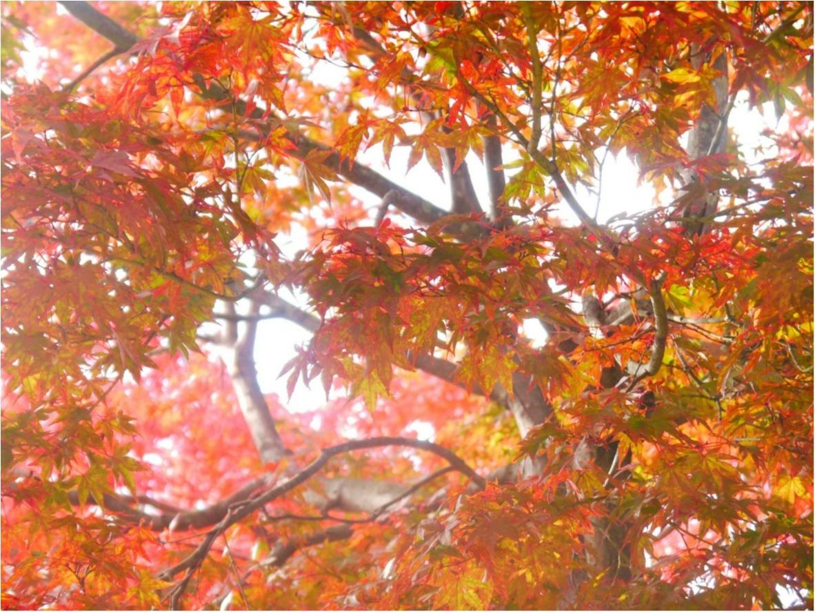 【しの散歩】世界一登山客が多い山!東京の紅葉スポットといえば、やっぱり『高尾山』がおすすめ♪_4