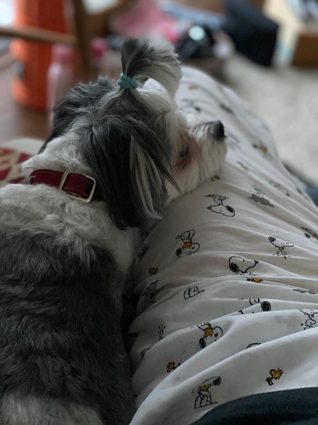 布団で寝ていると甘えて上にのってきた太郎くん