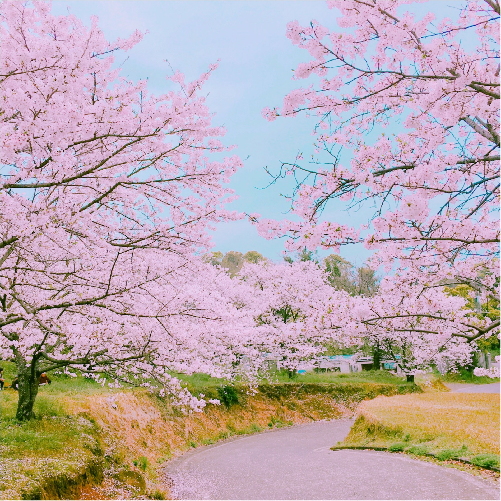 動画でも熊本の魅力を伝えます!!【#モアチャレ 熊本の魅力発信!】_2