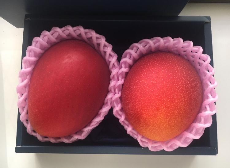 【フルーツ】特大マンゴーで至福のひととき♡_1