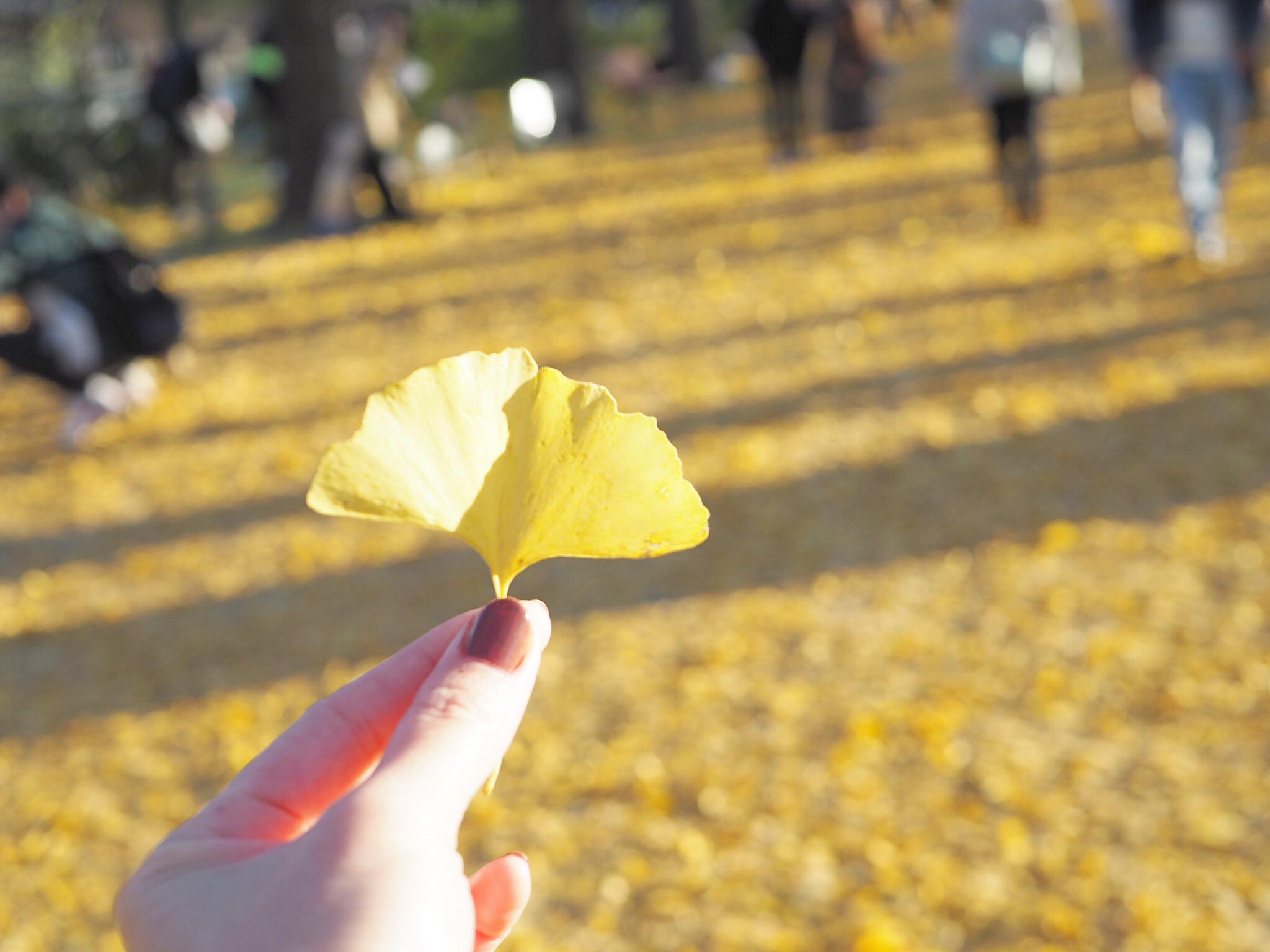 【秋の昭和記念公園】銀杏並木と紅葉サイクリング♩_13