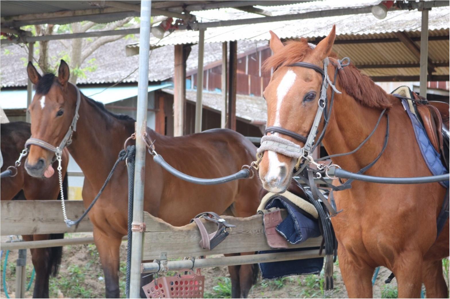 【モアチャレ】ずっとやりたかったこと!乗馬はじめました♡_2