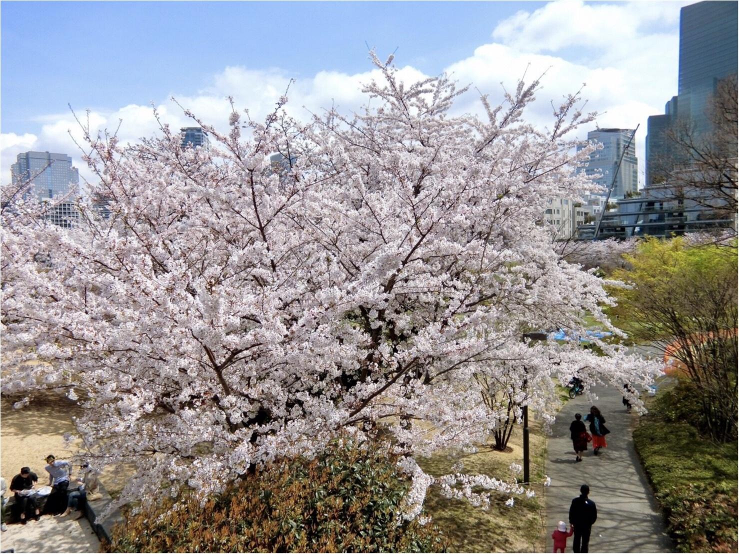 【可愛いフォトスポットも☆】六本木・東京ミッドタウンでお花見してきました!_1