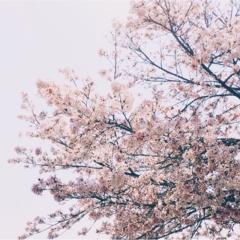 春の休日散歩♡モアハピ部いちさんとお食事に行ってきました!♡