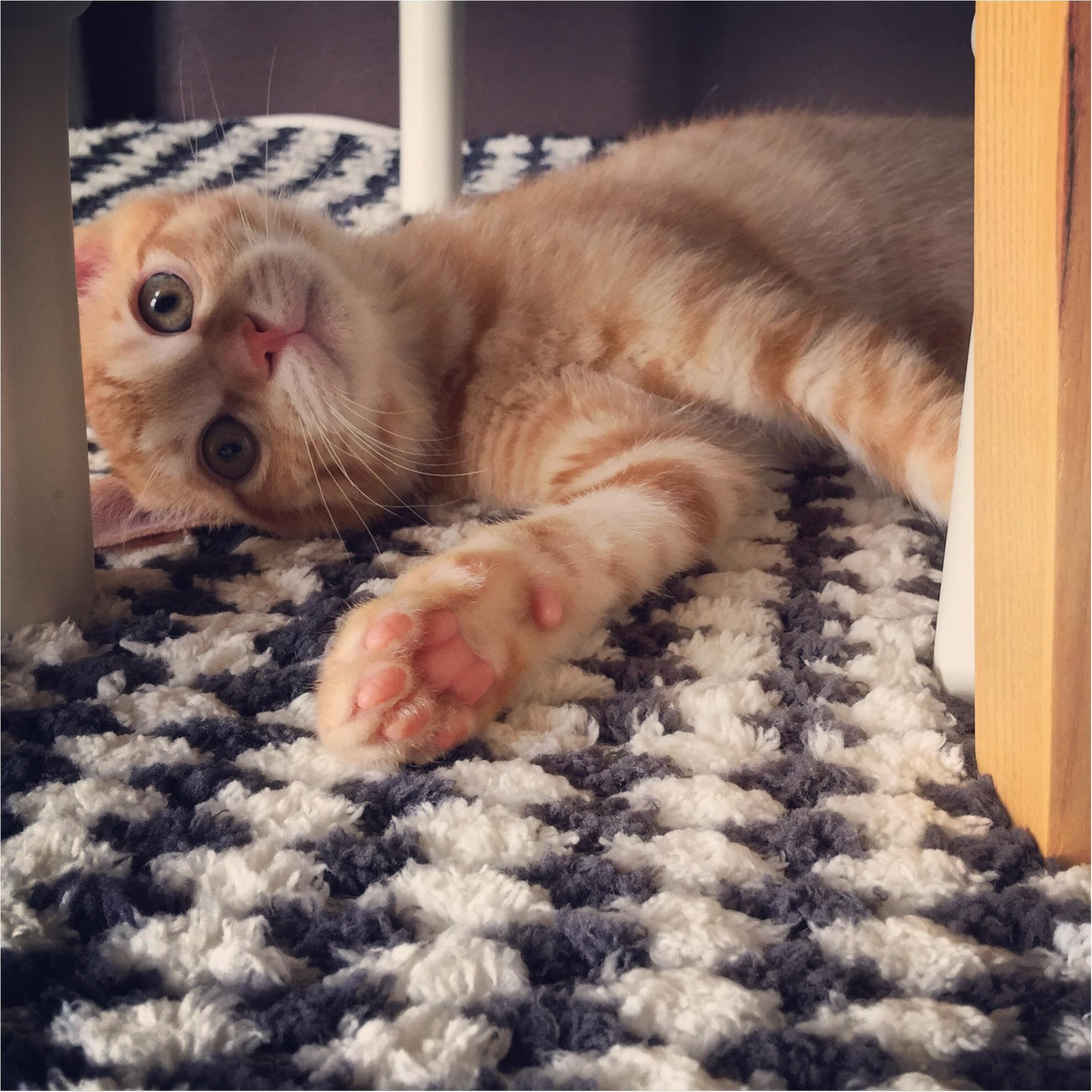 【今日のにゃんこ】子猫のぽぽくんは、かくれんぼに夢中♡_1