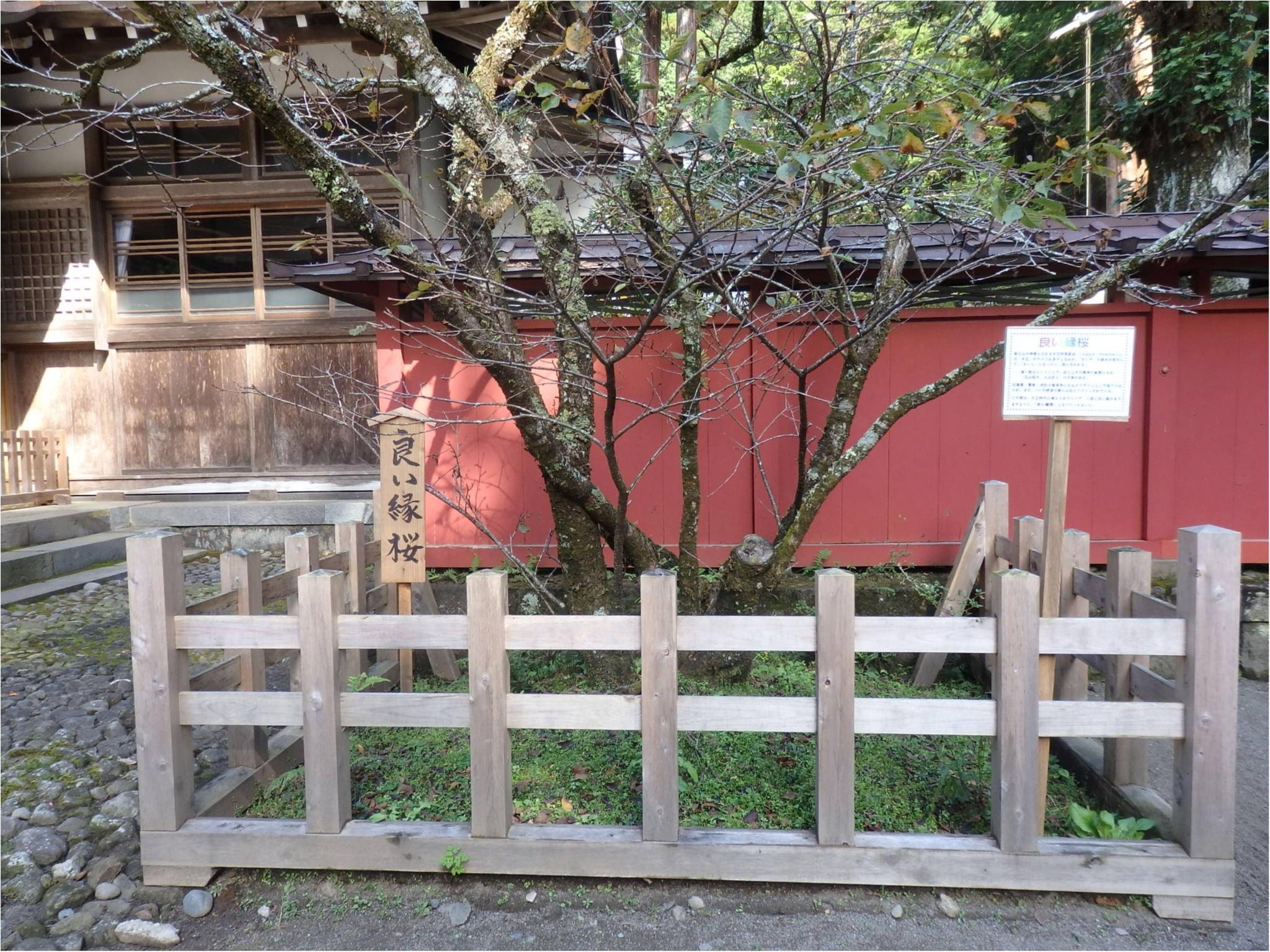 【知らなかった!】日本一楽しめる神社へ潜入してみた_14