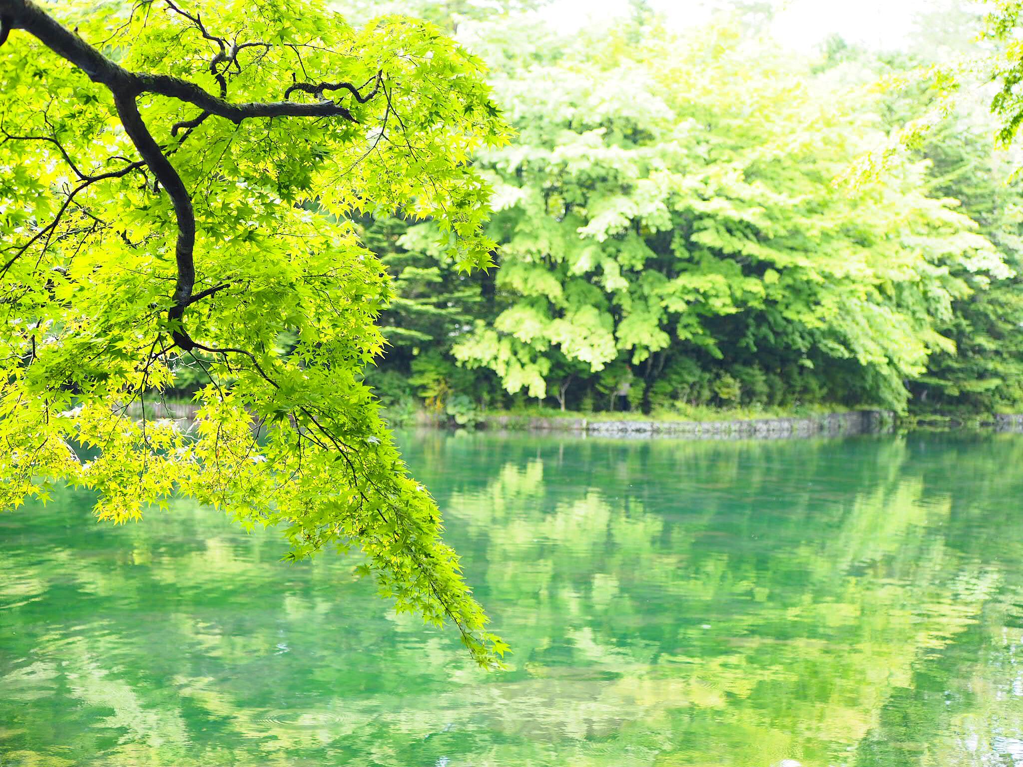 【軽井沢・日帰り紅葉旅におすすめ】リフレクションが美しい「雲場池」★_5