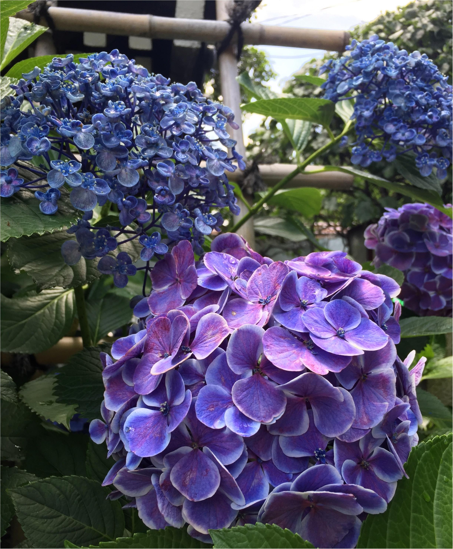 【今が見頃!】6月のおでかけは紫陽花まつりがおすすめ*写真映えするコーデのポイントも♡_4