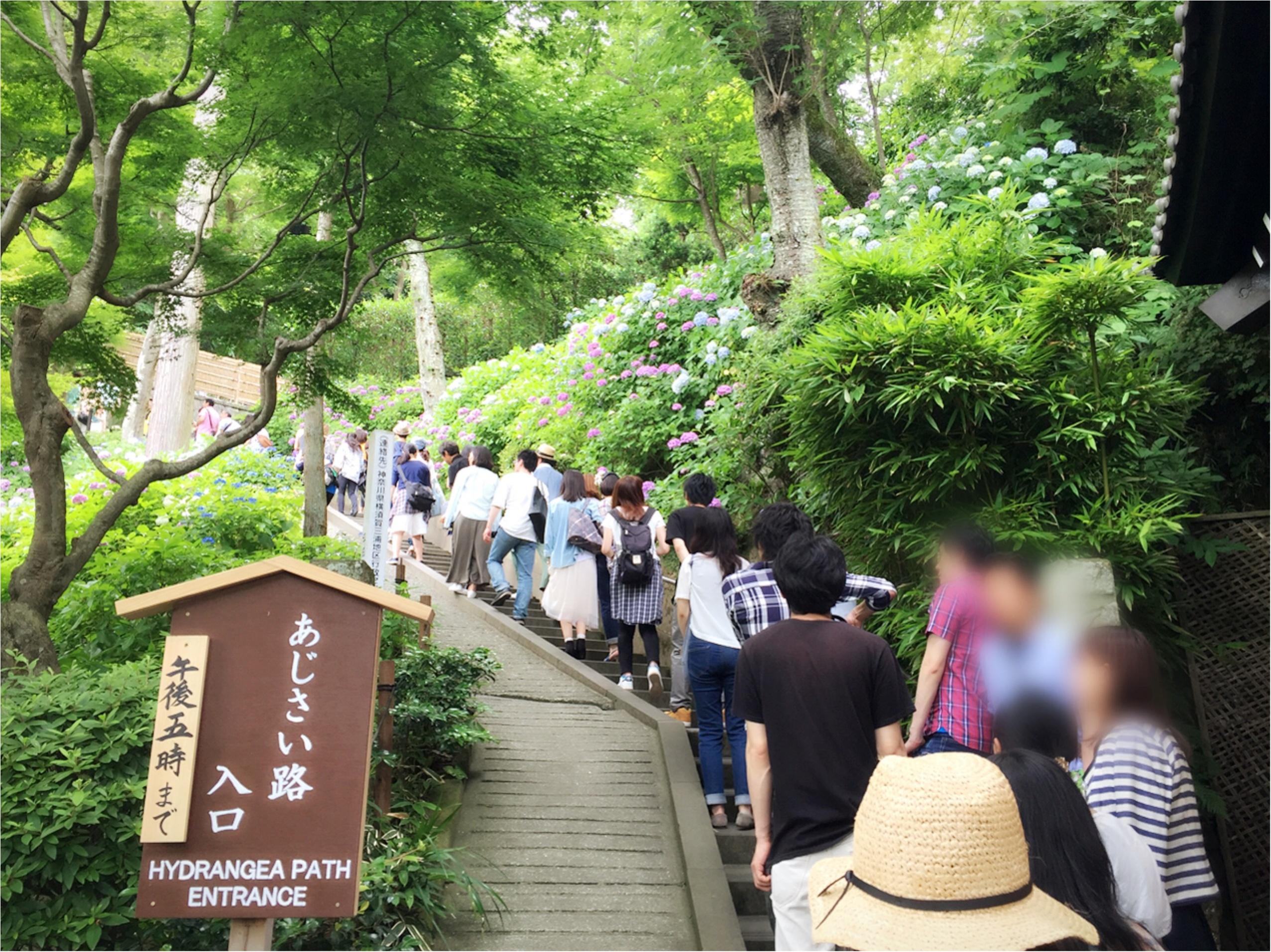 週末鎌倉さんぽ。今が見頃!紫陽花を見に長谷寺へ行ってきました♡*_3