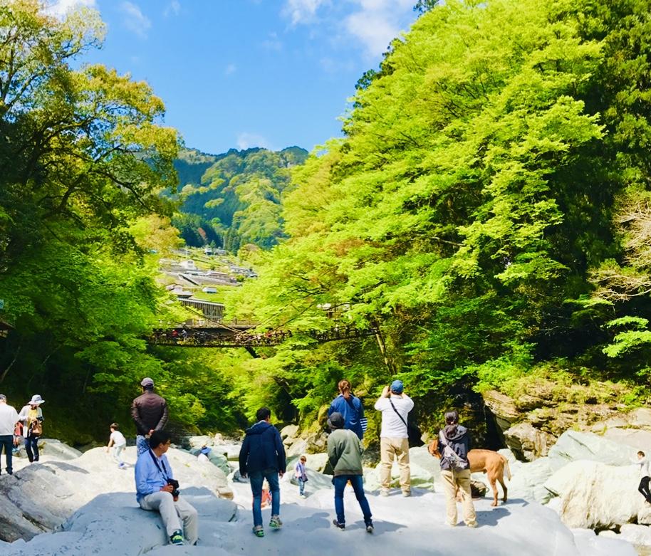 【女子旅におすすめ】徳島県に来たら外せない!癒しの絶景スポット《祖谷のかずら橋》★_7