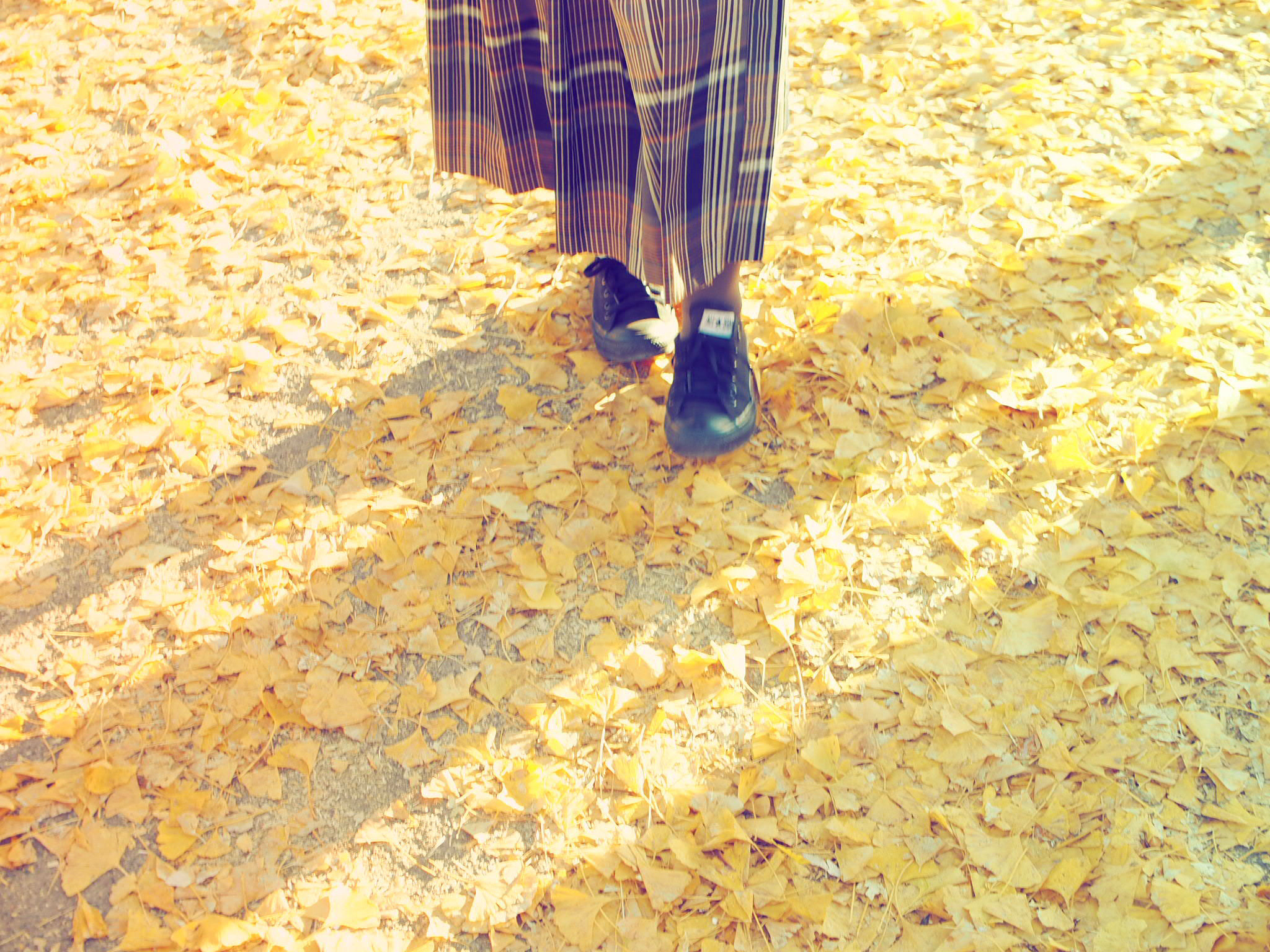 【秋の昭和記念公園】銀杏並木と紅葉サイクリング♩_3