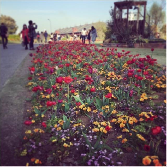【初夏にぴったり!】週末に行きたい横浜お散歩デート♡♡_1