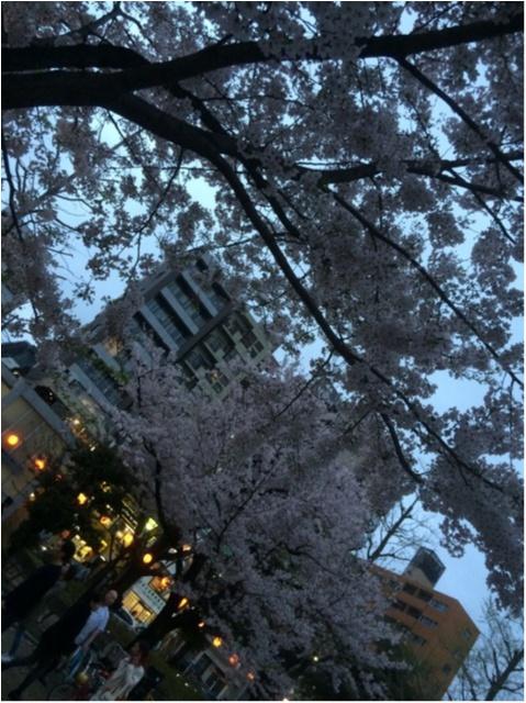 【今週末が見頃!】都内で発見❤︎穴場のお花見スポット_7