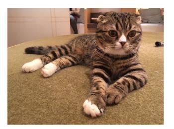 【GWはここで決まり!】日本最大級の猫カフェが新宿に⁈オシャレなラウンジカフェで可愛い猫たちに癒される!