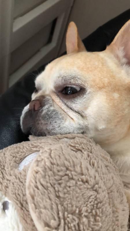 ママに甘える犬・マツコ