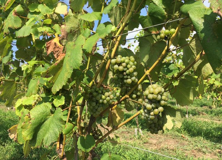 【女子旅におすすめ】ワイン好きさん必見♪葡萄畑を眺めながらゆったりワイナリーステイ♡_3