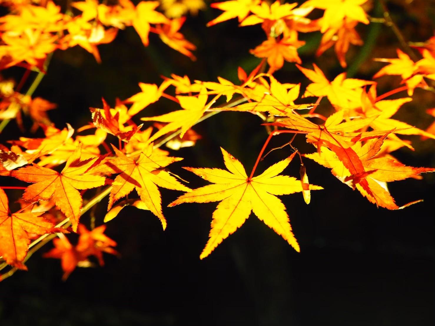 【女子旅におすすめ】京都で体験して最高だったベストメモリーまとめ♡_18