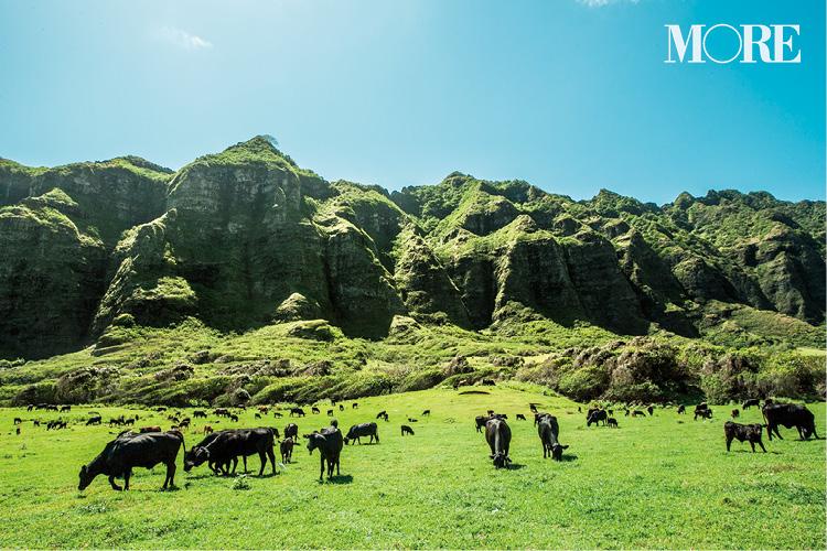 ハワイのおすすめスポット、グルメ、お土産etc. Photo Gallery_1_2